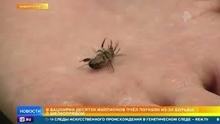 Десятки миллионов пчел погибли в Башкирии из-за борьбы с шелкопрядом