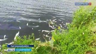 В Башкирии на озере в селе Толбазы массово гибнет рыба