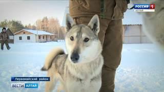 О том, стоит ли притравливать собак, спорят охотники и зоозащитники