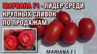 ТОМАТ МАРИАНА F1 - ЛИДЕР СРЕДИ КРУПНЫХ СЛИВОК ПО ПРОДАЖАМ