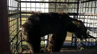 В Башкирии фермер взял на ПМЖ медведя с невероятной историей