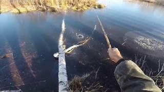 Рыбалка первый лёд  2018 - 2019,  первый ротан на личинку майского жука, видео rybachil.ru