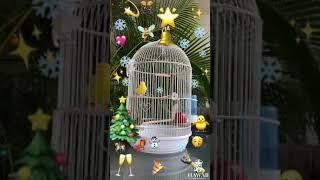 Новый год на Гавайях поздравление и доброе утро первого января