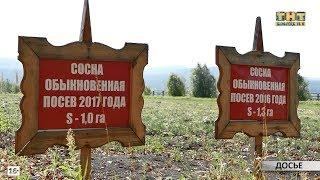 Посадка леса в Белорецком районе