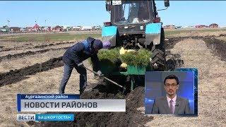 Новости районов: месячник по посадке леса в Толбазах и вручение жилищных сертификатов в Балтачево