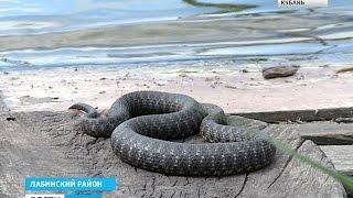 Во время рыбалки мужчину покусали 37 змей