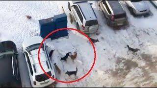 Стая собак орудует в городе Октябрьский Башкортостан