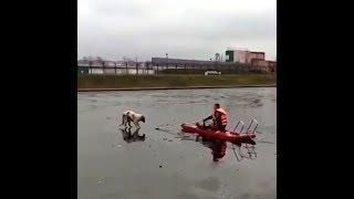 В Салавате пожарные спасли собаку со льдины | Ufa1.RU