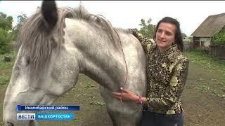 В Башкирии девушка-бухгалтер стала дрессировщицей лошадей