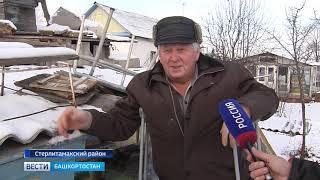 Пасечники Башкирии требуют вернуть деньги за массовую гибель пчёл