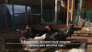 UTV. Новости запада Башкирии за 31 октября