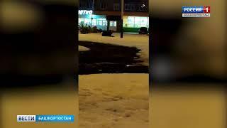 По улицам Салавата разгуливает медведь