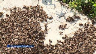 Пчелы мрут не только в Башкирии: соседние регионы бьют тревогу