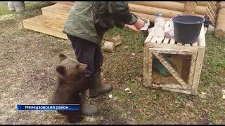 Медвежонок, над которым издевались в Тыве, добрался до Национального парка «Башкирия»