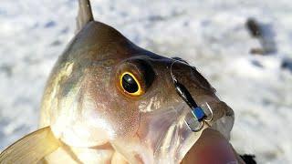 ТАМ, ГДЕ НЕ ИМЕЕТ ЗНАЧЕНИЯ КУРС БАКСА! Рыбалка 2020 на мормышку на малой реке, жерлицы и безмотылка