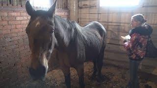 UTV. Старейшую лошадь Уфы вместе с жеребенком арестовали приставы. Почему кони оказались за решеткой