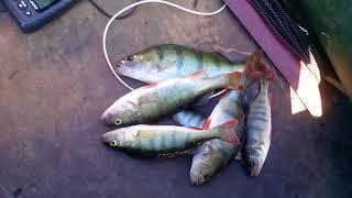 Кандрыкуль. Рыбалка. Спиннинг.