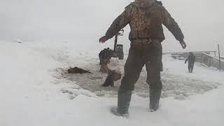 В Башкирии табун из семи лошадей провалился под лёд