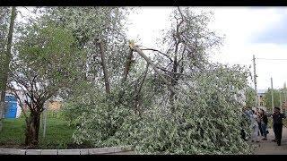 Новости UTV. Дерево упало на автомобиль