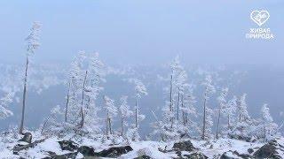 Гора Иремель. Башкортостан. Часть 2