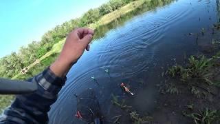 Рыбалка на поплавочную удочку. Карась как всегда радует своим клёвом.