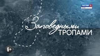 Заповедными тропами. Ремдовский заказник 5.08.17