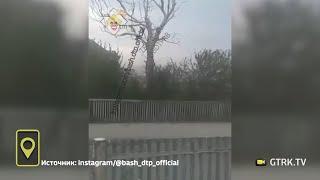 «Разве нельзя было спилить вовремя»: В Башкирии на бегуна едва не упало дерево