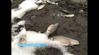 В Стерлитамакском районе гибнет рыба