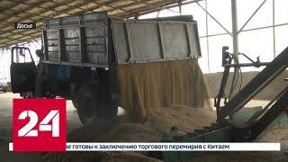 Теперь Россия может продавать пшеницу Саудовской Аравии - Россия 24