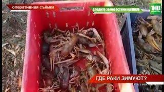 25 тысяч речных раков в садках спасских браконьеров | ТНВ