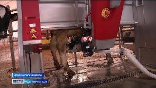 Теперь коров доят роботы: впервые в Башкирии заработала новая роботизированная молочная ферма