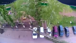 Момент падения высокого дерева на машины в Башкирии попал на видео