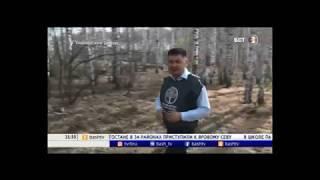 В Башкирии за выходные высадили более 1,5 млн деревьев.