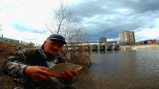 Открытие сезона 2019!!! Фидер лещ!!! Рыбалка в черте города.