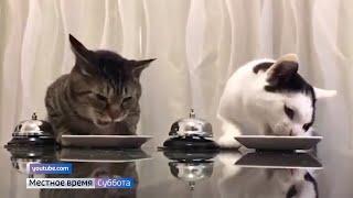 Стоит ли переплачивать за дорогой корм: советы ветеринаров и выбор кошек