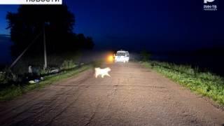 Ночью 11-го июля в Бирске произошло смертельное ДТП