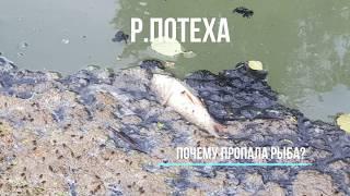 Благовещенск РБ. В реке умерла вся рыба!!!