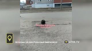 «Напомнил о гигиене»: в Башкирии по городу прогулялся бобер