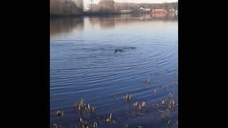 Уфа озеро тёплое