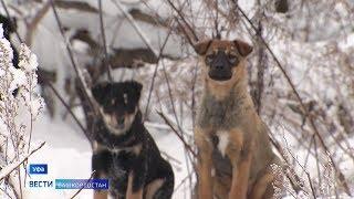 В Уфе догхантеры расстреляли собак прямо в приютах