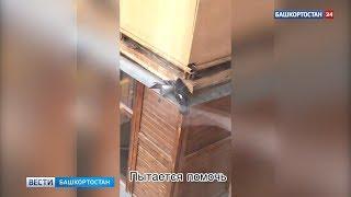 В Уфе сняли трогательное видео: голубь пытался спасти попавшего в ловушку друга