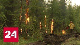 В Якутии за сутки удалось потушить почти две тысячи гектаров леса - Россия 24