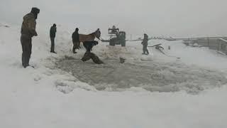 """""""Вода была ледяная"""": в Башкирии спасли 11 тонущих лошадей"""
