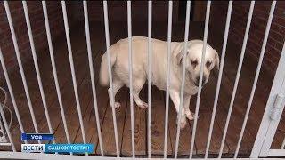 Больше 400 собак: под Уфой открылся кинологический центр МВД