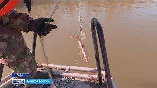 С началом нерестового периода в Башкирии усилили контроль за незаконной рыбалкой