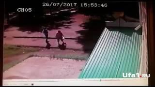 Мужчину ищут за убийство кошки
