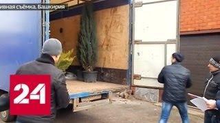 Вице-мэр Нефтекамска попросил взятку деревьями - Россия 24
