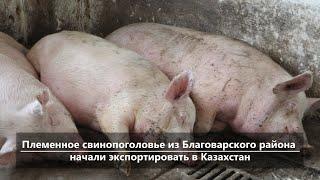 UTV. Новости центра Башкирии за 3 февраля