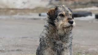Качество жизни - 18.04.19 Собака человеку друг?