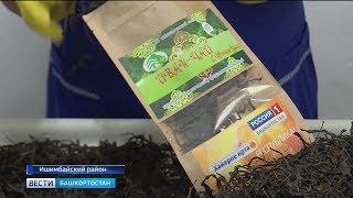 В Ишимбае запустили первый в Башкирии самодельный цех по производству Иван-чая